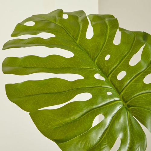 Hoja-de-Monstera