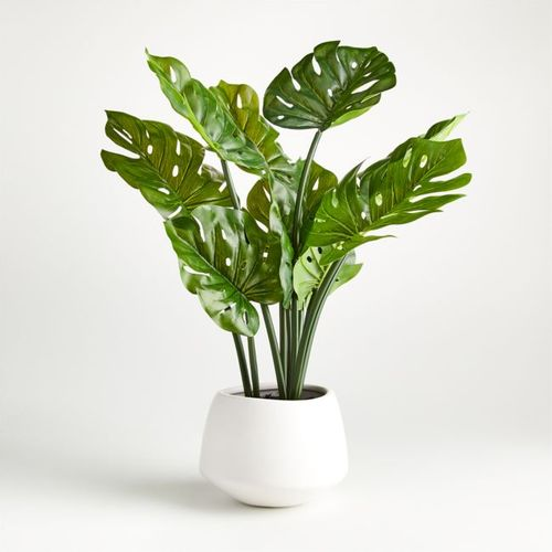 Planta-Monstera-24-Crate-and-Barrel