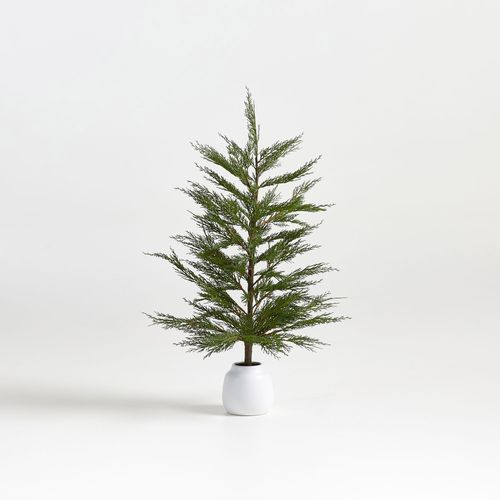 Potted-Cypress-Tree-33--Crate-Barrel